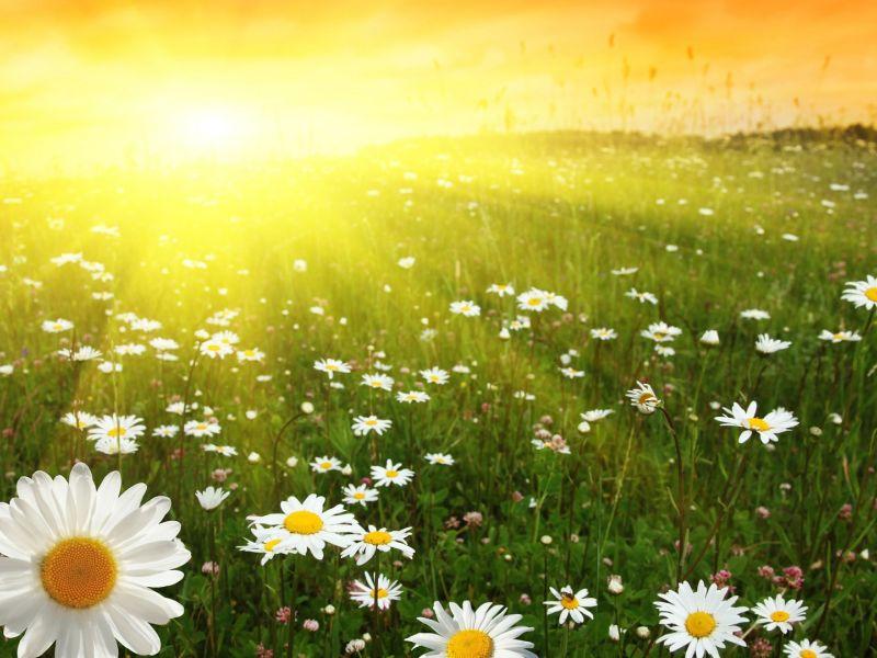 Солнце в домах гороскопа
